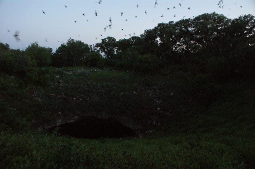 Jato šišmiša leti oko ulaza u špilju.