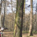 Dvoje ljudi u šumi gleda šišmiša kako odlijeće.