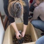 Tri osobe skupljaju šišmiše s poda lođe i pohranjuju ih u kartonsku kutiju. Pri radu si pomažu zaštitnim rukavicama.