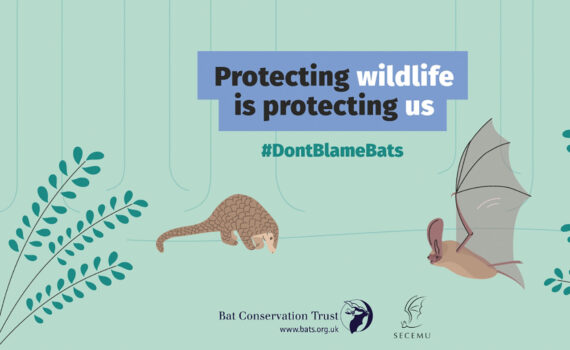 Protecting wildlife is protecting us - kampanja DontBlameBats kampanja
