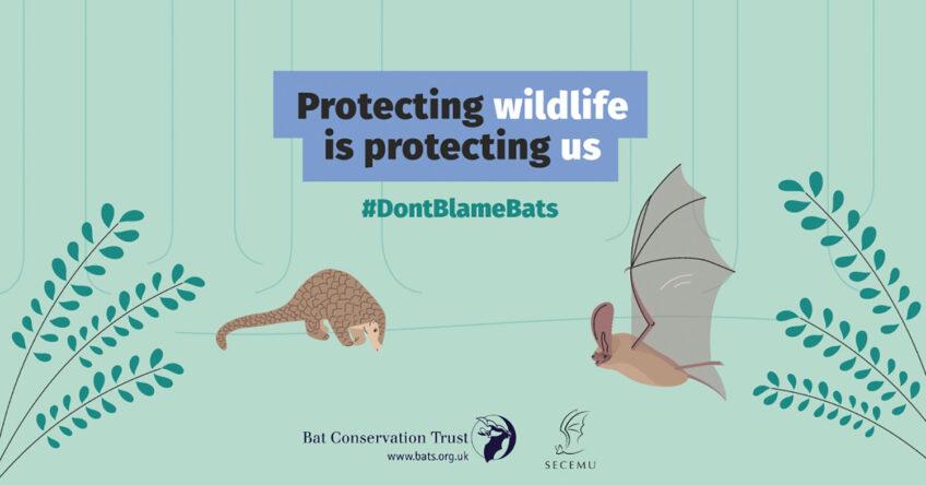 Protecting wildlife is protecting us - kampanja DontBlameBats kampanja
