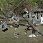 Fotografije vrsta šišmiša pronađenih u Nacionalnom parku Brijuni do šestog obilježavanja Noći šišmiša ovješene o grane bora u parku kraj crkvice Sv. Germana.